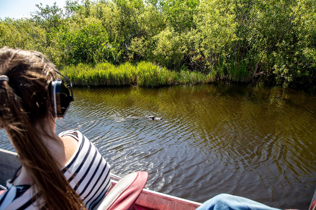 Cooper Town Airboats - aligator