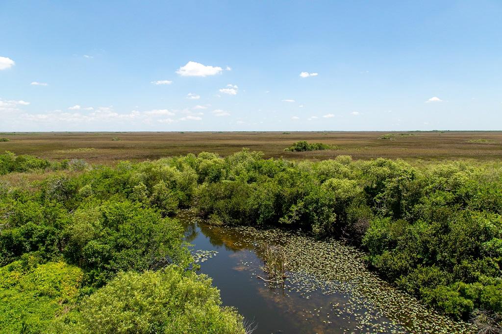 Shark Valley - panorama