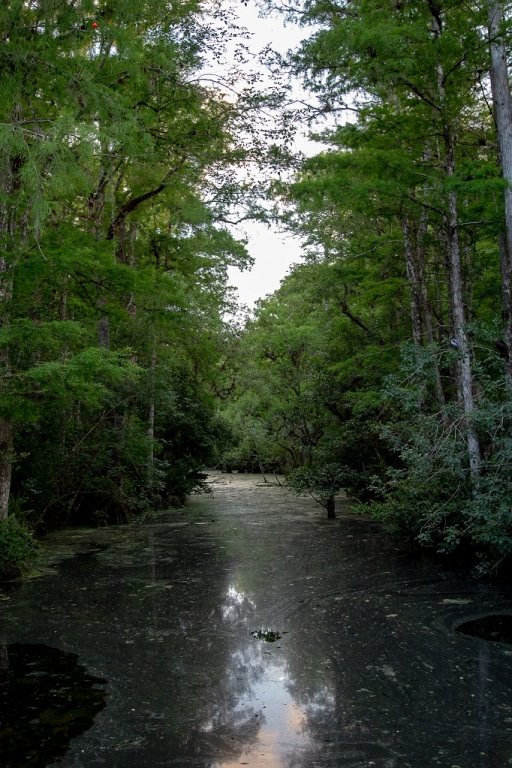 Big Cypress National Preserve - bagna