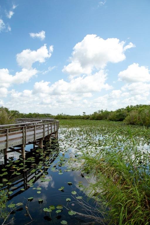 Park Everglades - Anhinga Trail