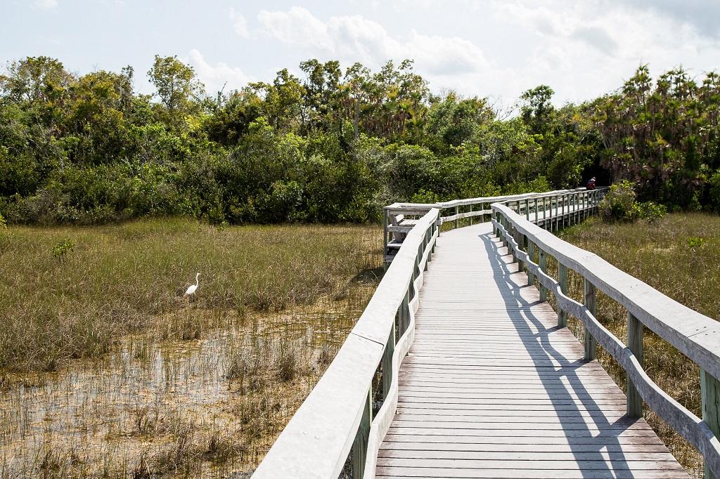 Pineland - boardwalk