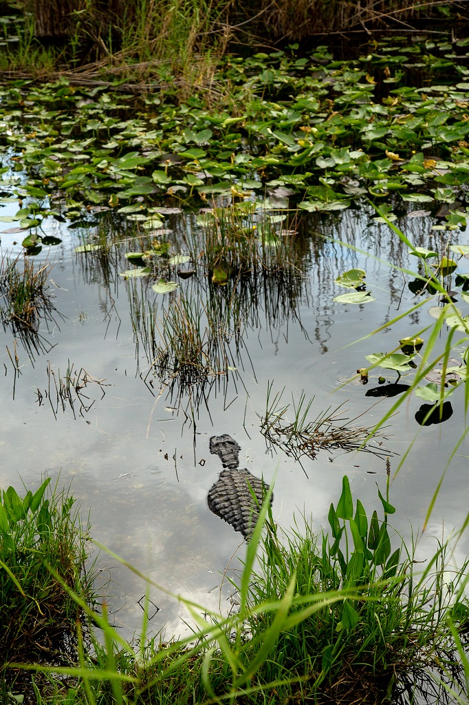 Park Everglades - Royal Palm