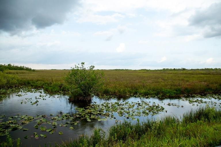 Anhinga Trail - nenufary