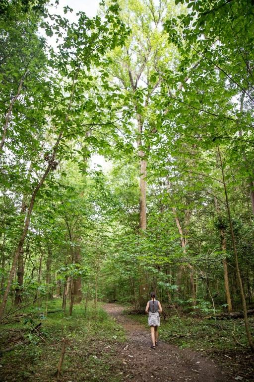 Boardwalk Loop Trail - dalej w las