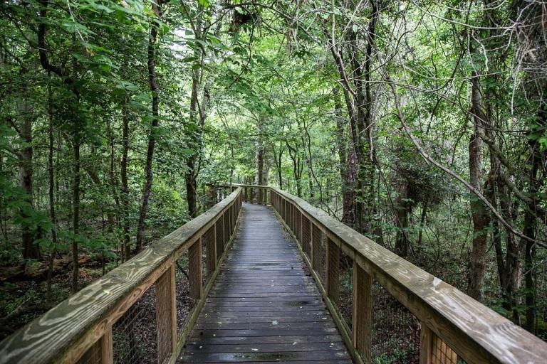 Congaree Park Narodowy - boardwalk