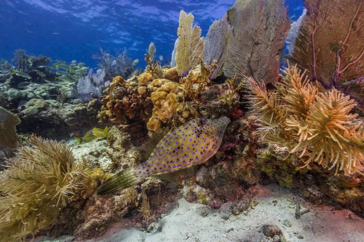 NPS PHOTO Biscayne Bay - rafa koralowa