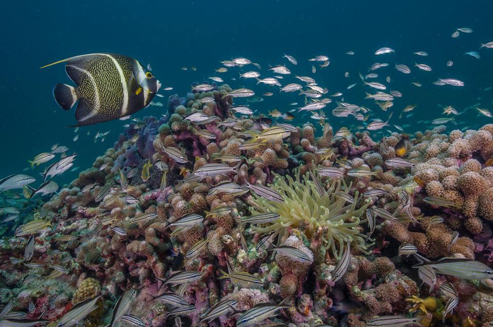 NPS PHOTO Biscayne Bay - życie podwodne