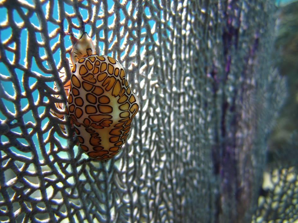 NPS PHOTO Biscayne Bay