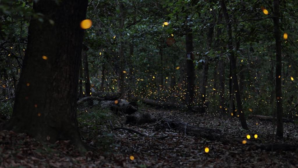 Bluff Trail - świetliki