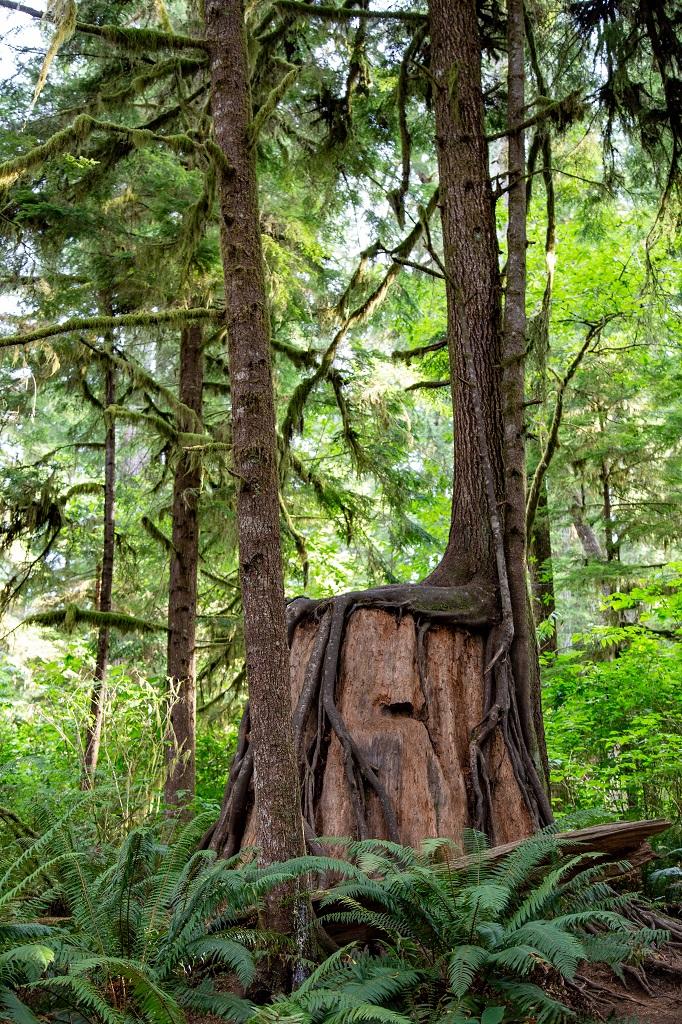Rain Forest Nature Trail - drzewo