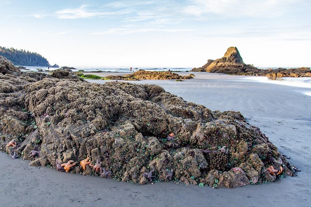 Ruby Beach - widok skałki