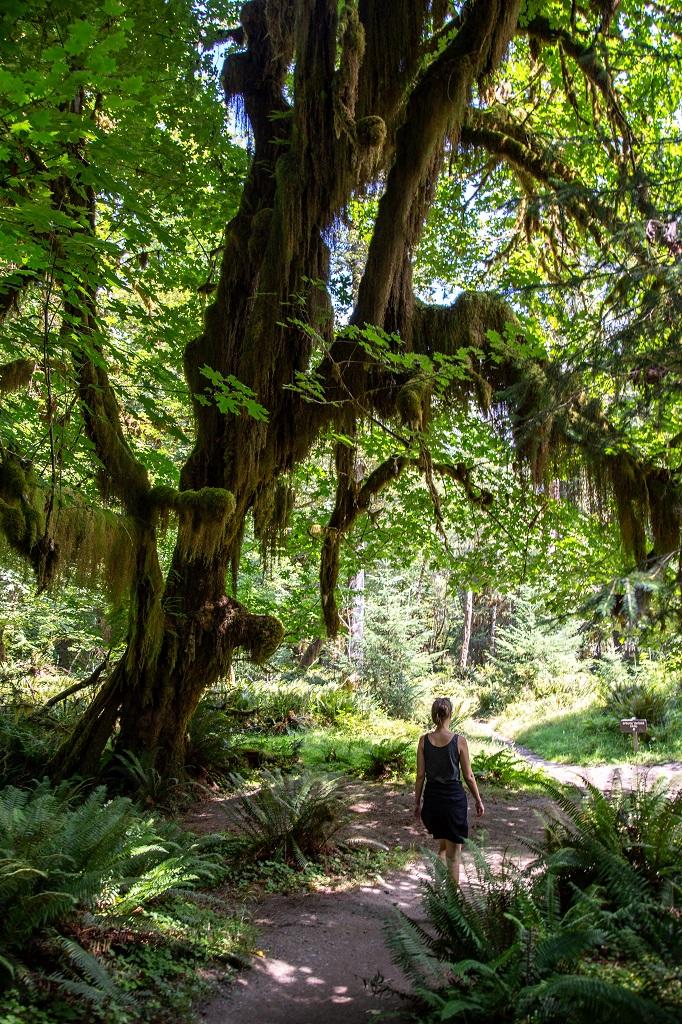 Hall of Mosses - ścieżka