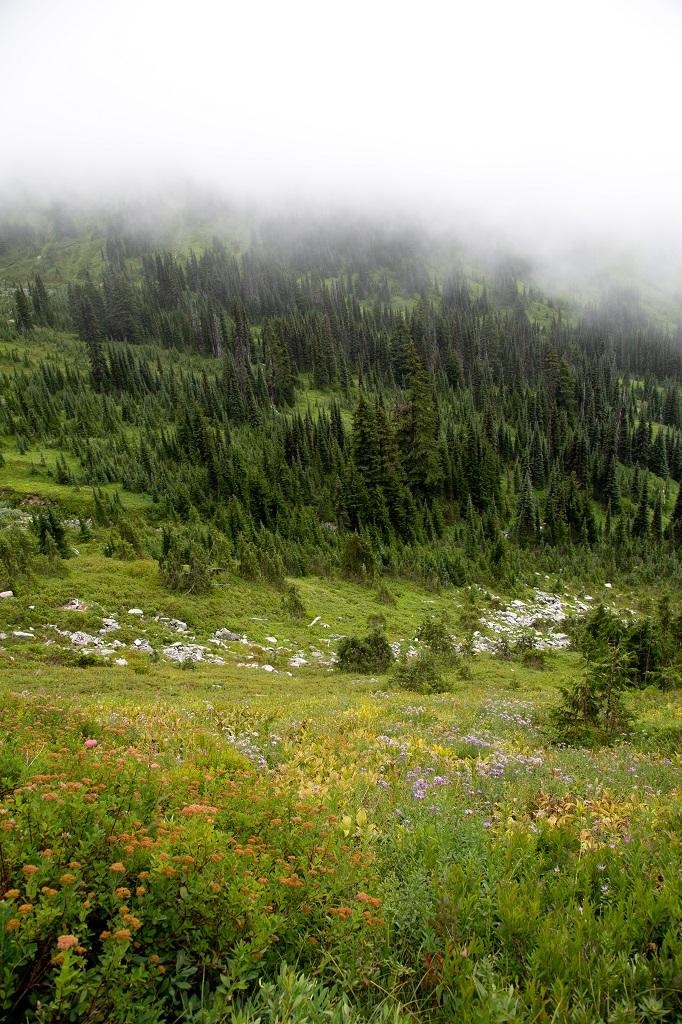 Skyline Trail - łąka