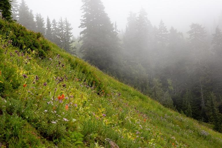 Skyline Trail - kwiaty