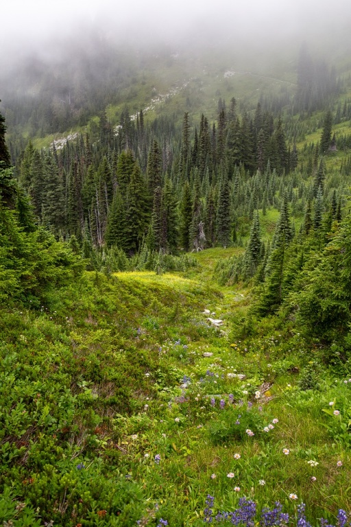 Skyline Trail - zielone zbocze