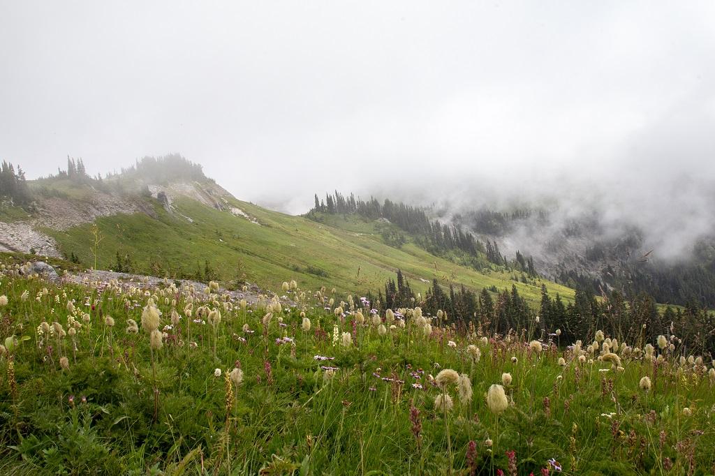 Skyline Trail - polne kwiaty